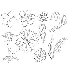 Contour flowers vector