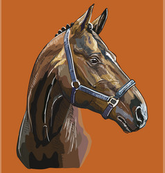Hand drawing horse portrait 27 vector
