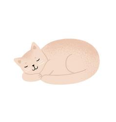 Relaxed fluffy beige cat sleeping flat vector