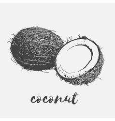 ripe coconut vegan vector image