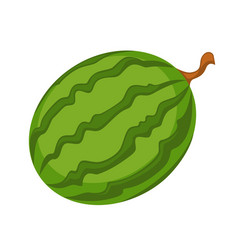 watermelon icon isolated on white fresh organic vector image