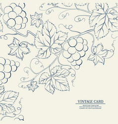grapes design for wine menu vector image