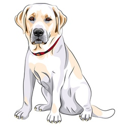 Labrador Retriever vector image