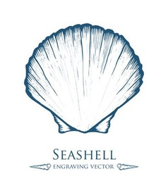 Seashell Drawing vector image