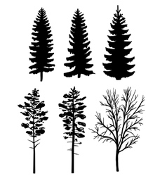 silhouettes of forest trees vector image