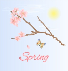 Spring twig cherry and butterfly vector