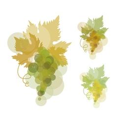 White wine grape green natural color grape vector