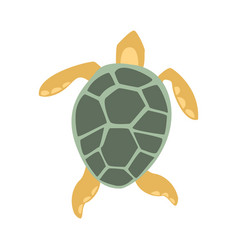 Yellow and grey turtle part of mediterranean sea vector
