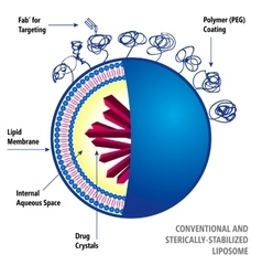 Conventional and sterically-stabilized liposome vector