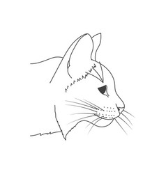 cat sketch vector image