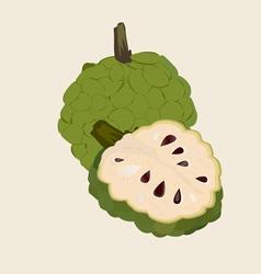 Custard apple vector