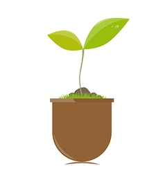 Flower pot with plant vector