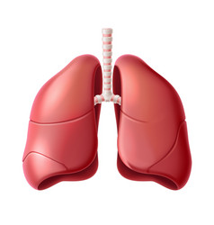 human lungs anatomy structure 3d icon vector image