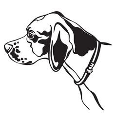 image pointer dog on white background vector image
