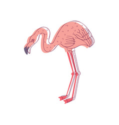 Linear of pink flamingo side vector