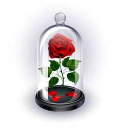 Red rose under the dome on white background vector