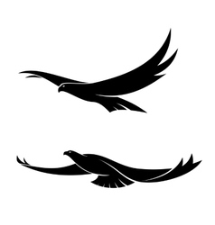 Two graceful flying birds vector image
