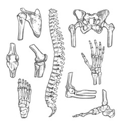 Sketch icons of human body bones and joints vector