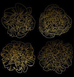 golden peonies set vector image