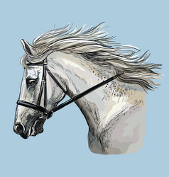 Hand drawing horse portrait 30 vector