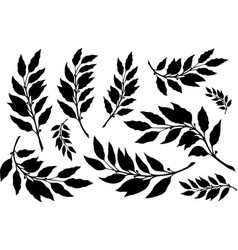 Laurels leaves with branches silhouette set vector