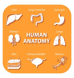 Set icons with shadow Human anatomy vector image vector image