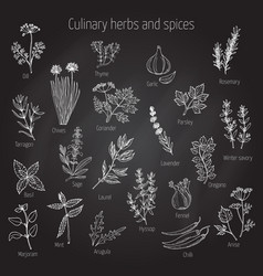 Set of culinary herbs and spices vector