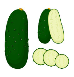 set with cucumber vector image