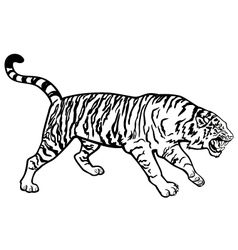 tiger black and white vector image vector image