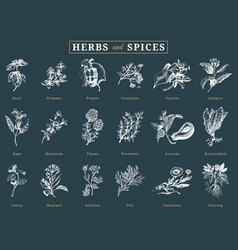 drawn herbs and spices set botanical vector image