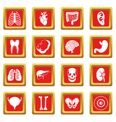 Human organs icons set red vector