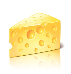 object cheese vector image