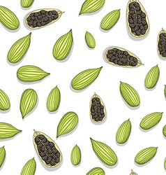 Seamless pattern with sketch cardamom Painted vector image