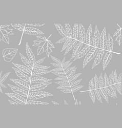 autumn pattern sheet seamless leaves fern vector image