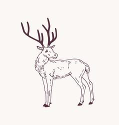 Beautiful sketch drawing standing male deer vector