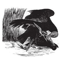 Black vulture vintage vector