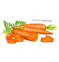 Carrots with leaves vector