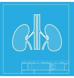 Human kidneys sign White section of icon on vector image