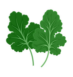 Large leaves parsley on a vector
