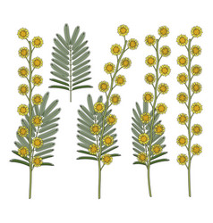 Set color with mimosa flowers vector