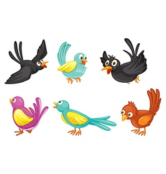 Six colorful birds vector