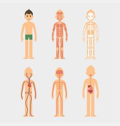 stylized male body vector image