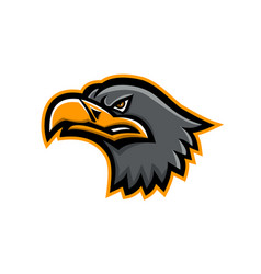 Eurasian sea eagle head mascot vector