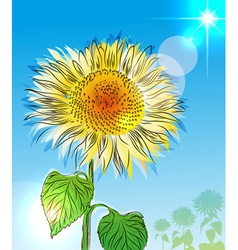 Hand Drawn Sunflower Sketch vector image