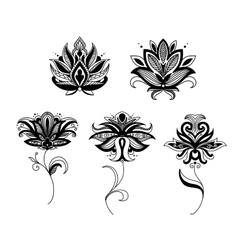 Indian and persian paisley flowers vector image