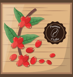 Premium coffee beans tree vector