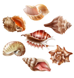 Realistic seashell set vector