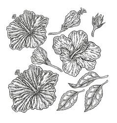 Hand drawn tropical flowers vintage floral set vector