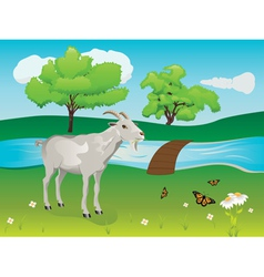 Goat and Green Lawn vector image