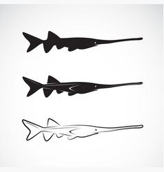 american paddlefish polyodon spathula on white vector image